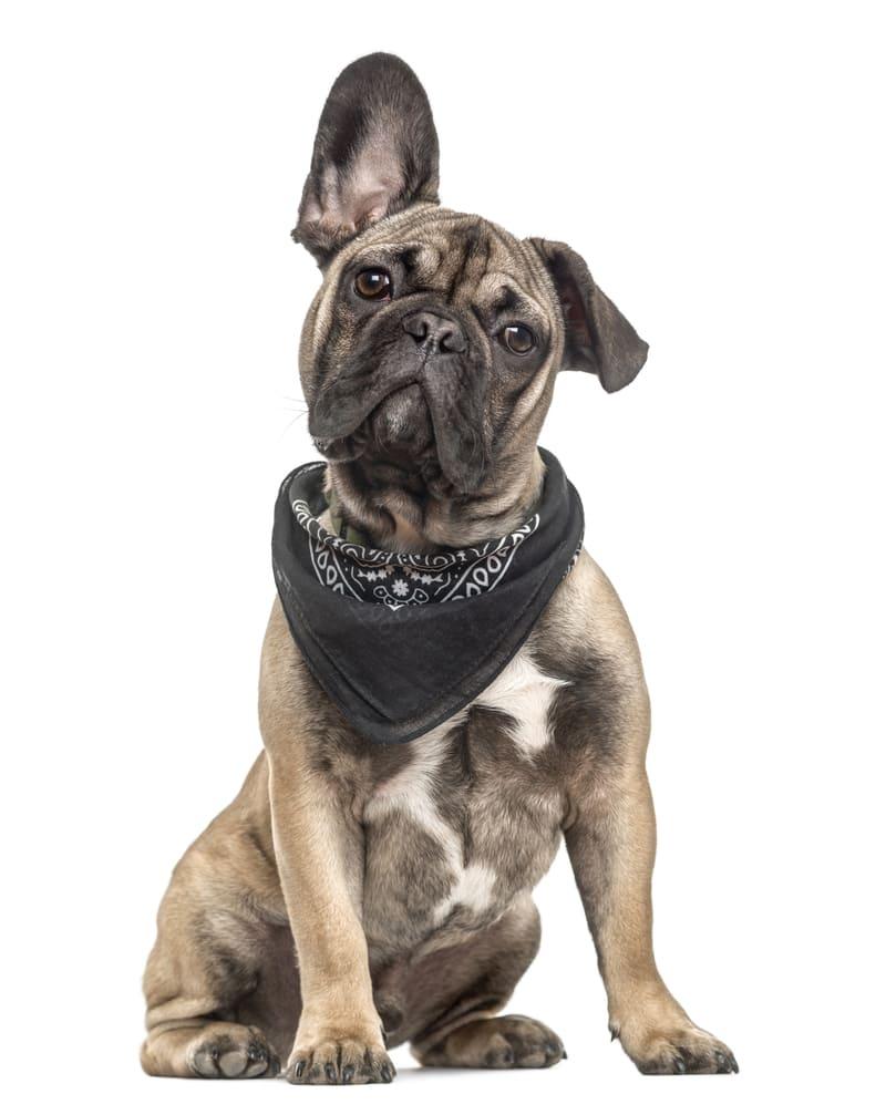 Accesorios para perros en cordoba