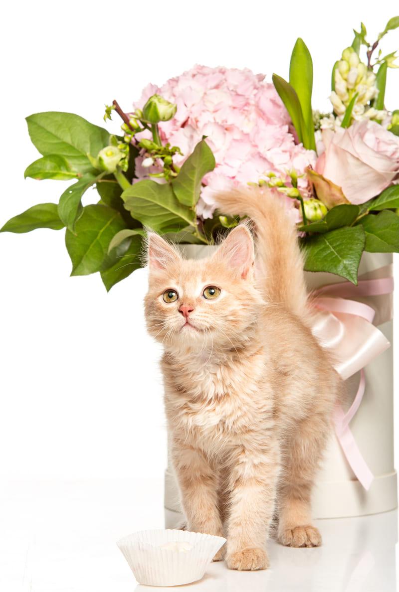 Articulos para gatos en Cordoba
