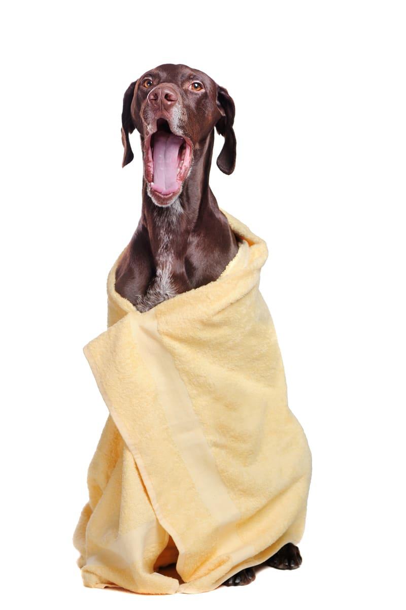 Lavado de perros - mascotas la vinuela