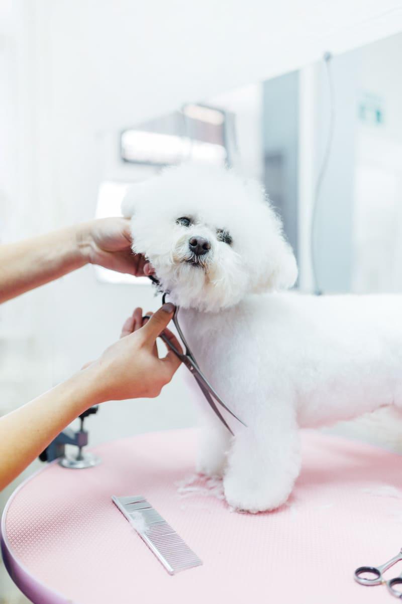 Stripping perros - mascotas la vinuela