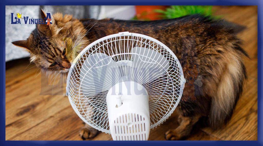Consejos para refrescar a un gato en verano