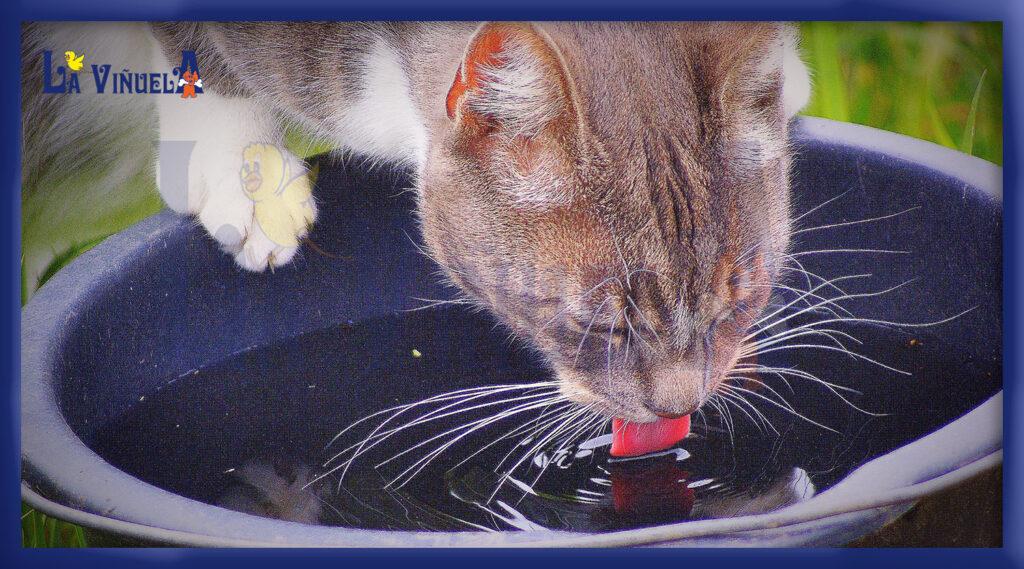Signos de deshidratación de un gato