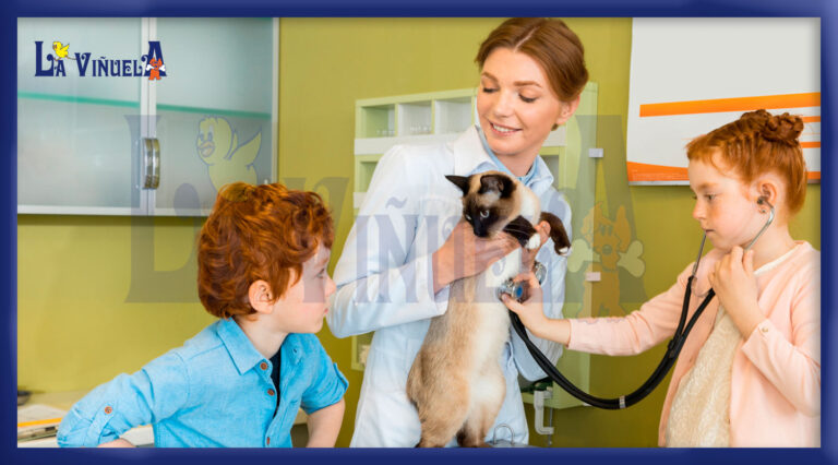 Consejos para llevar al gato al veterinario